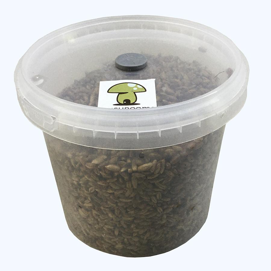 grain kit 2